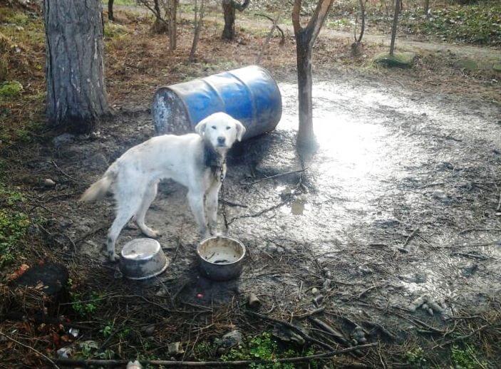 Zlostavljeni pas na Sebešu