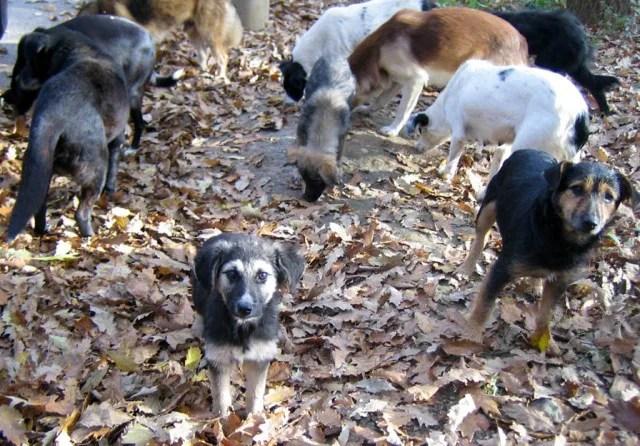Prihvatilište u Ovči svedok zlostavljanja pasa