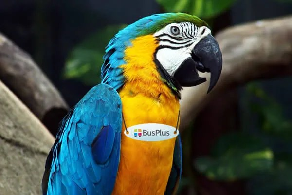 Bus Plus papagaj