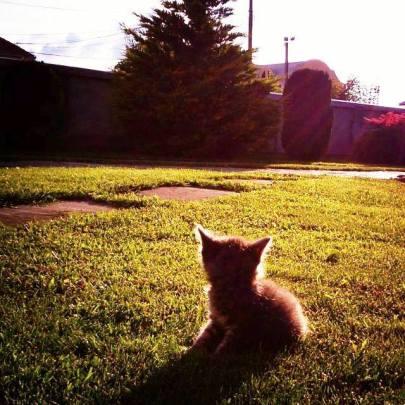Naši ljubimci ne žale se na travu koja raste u Borči :) — in Borca.