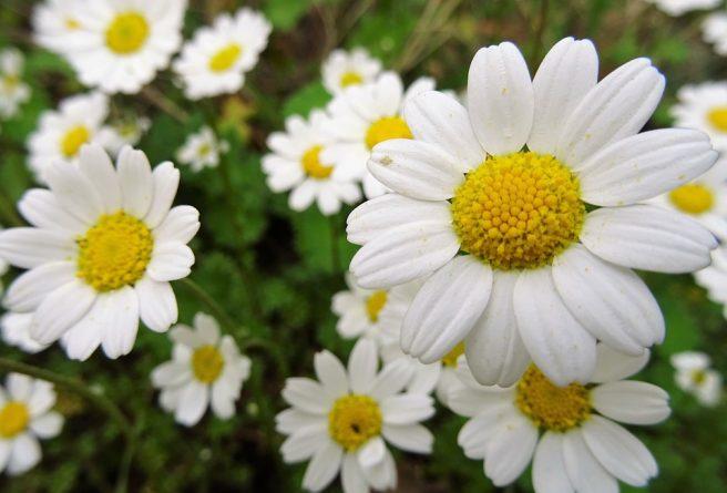 plantes apaisantes