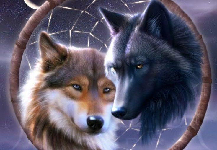 Resultado de imagen para imagenes lobos