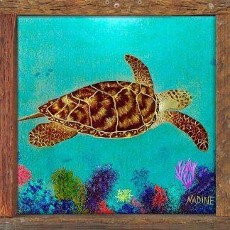 """""""Hawksbill Turtle """""""