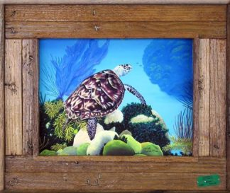 Green Sea Turtle swimming over a coral reef framed in a lobster trap wood frame