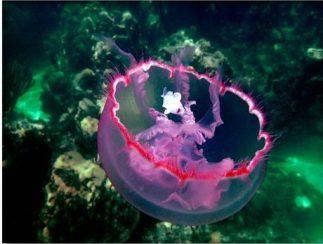 Underwater Prints Unframed