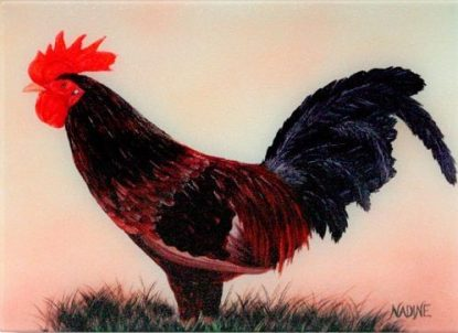 """""""Mr. Rooster"""""""