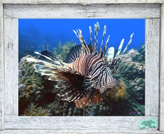 Framed Underwater Prints in Lobster Trap Frames