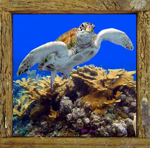 Turtle 30