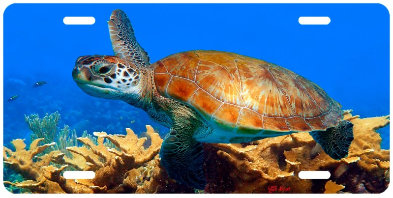 """""""TURTLE AND THE CORALS"""""""