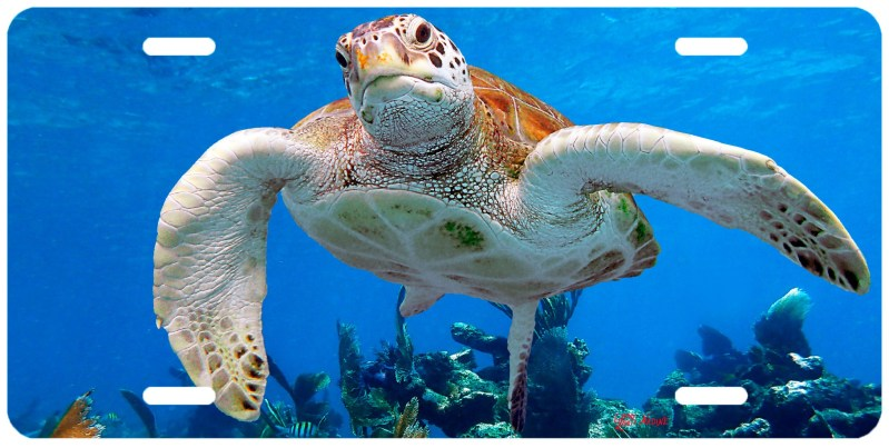 """""""TURTLE ON THE REEF"""""""