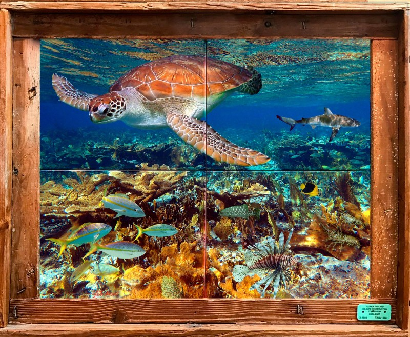 Bahamian Reef Tile Mural