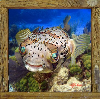 "Ceramic Tiles in our ""Mini"" Lobster Trap Frames"