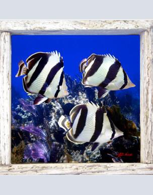 Underwater Photo Collection