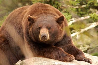 Use Enough Gun: Why You Should Bring a Big-Bore to a Bear Hunt