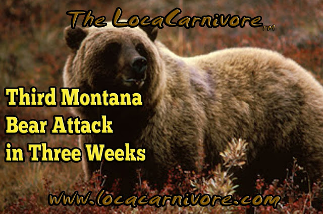 Third Montana Bear Attack in Three Weeks