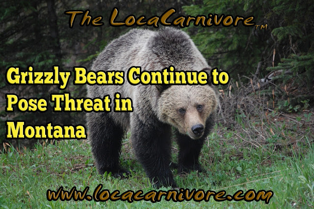 Grizzly Bears Continue to Pose Threat in Montana