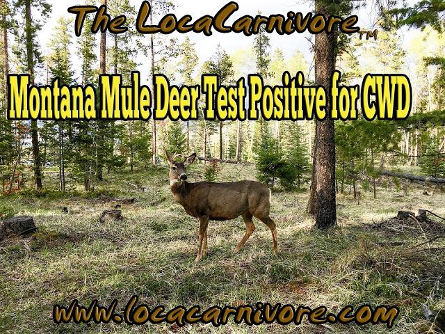 2017 cwd deer pin