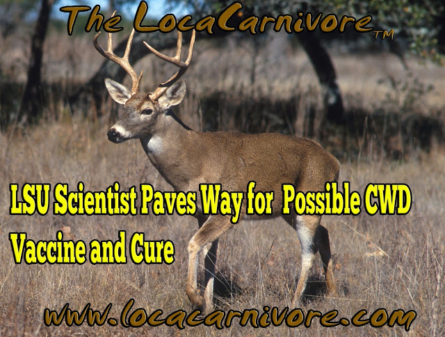 LSU Scientist Paves Way for Possible CWD Vaccine and Cure