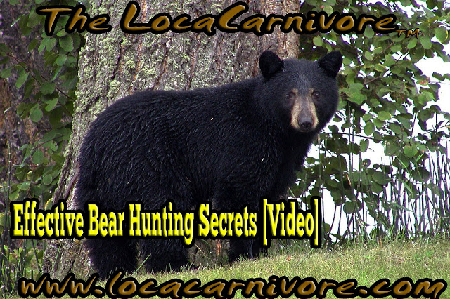 Effective Bear Hunting Secrets [Video]