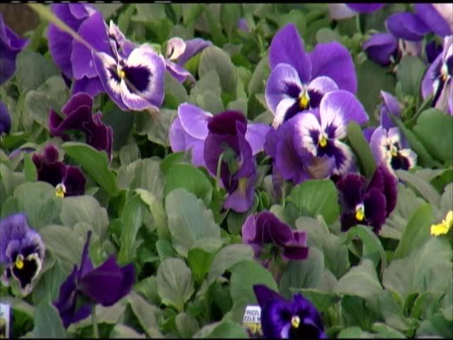 22nd Annual HCC Flower - Garden Show_90735149-159532