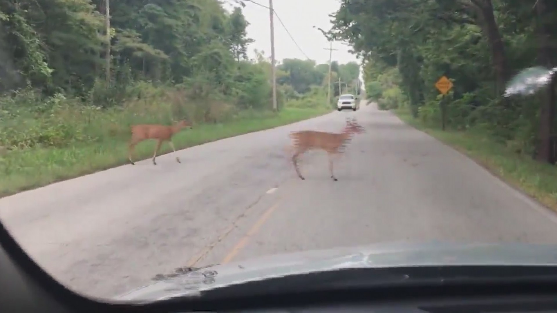 AAA_deer_warning_0_20181114234221