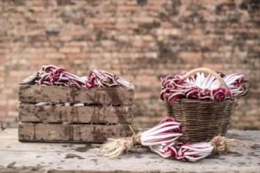 cassetta-antica-radicchio-rosso-treviso-igp-750x500
