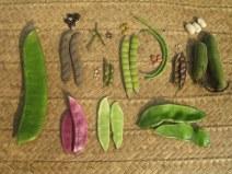 Varieties of beans: Alex Jensen