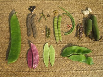 Varieties of beans: Alex Jensen