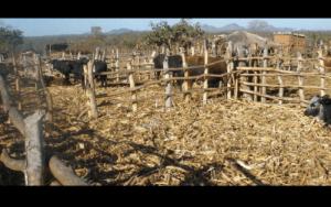 Shashe Agroecology School