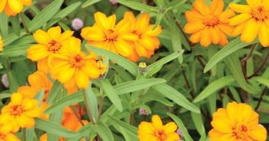 garden bug control