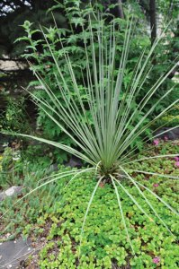 The structured contrast between the Dracaena plant and the ground cover is a clever design trick.