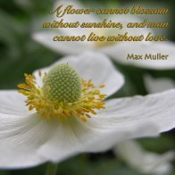 A flower cannot blossom without sunshine, and man cannot live without love. ~ Max Muller