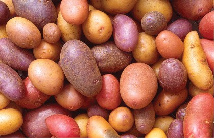 Potatoes come in a wide variety of colours, from white to purple.