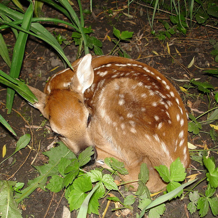 sleeping fawn garden after dark