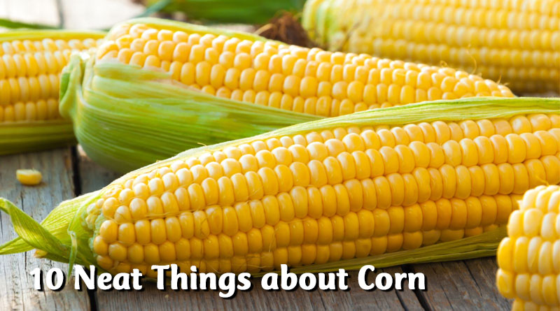 10 Neat Things about corn