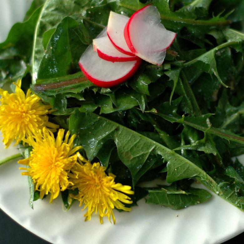 dandelion salad edible weed