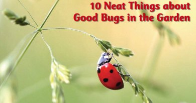 10 Neat Things about Good bugs in the garden