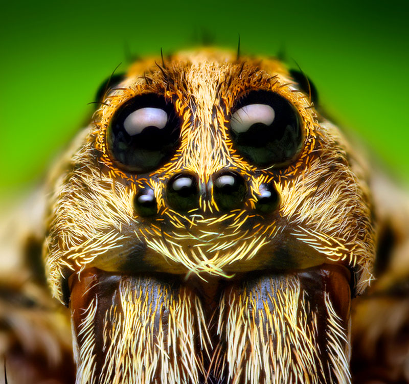 10 Neat Things about spiders eyes