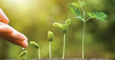 To plant seeds or buy plants