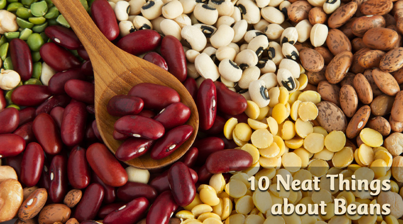10 Neat Things about beans