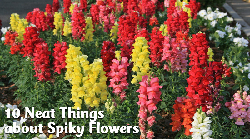 10 neat things about spiky flowers