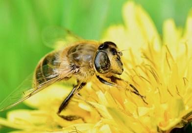 Pollinators in your Garden