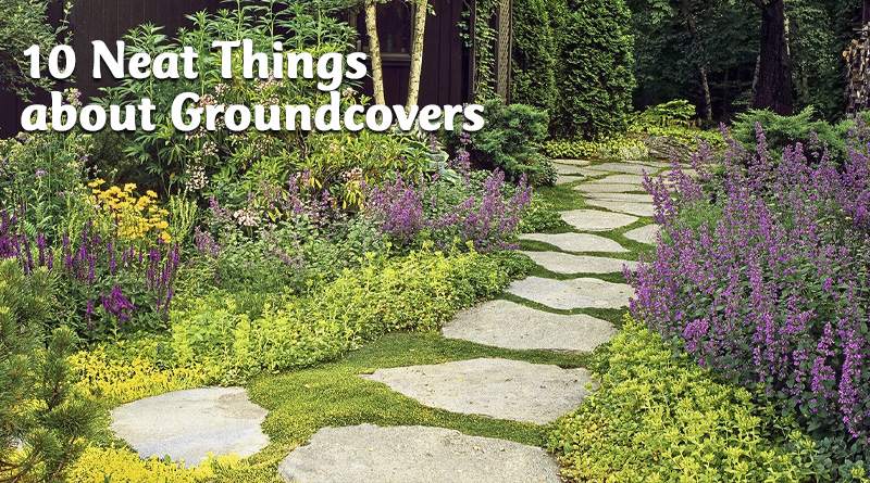 10 neat things about groundcover