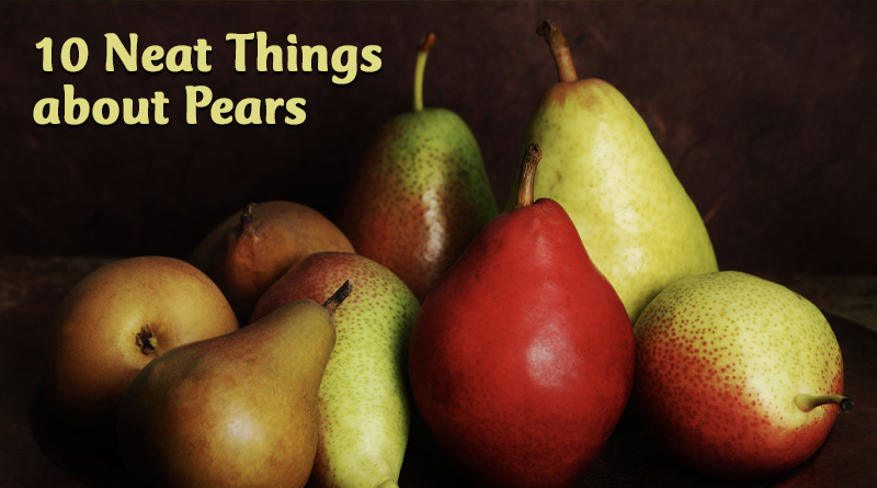 10 Neat Things about Pears