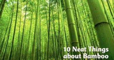 10 neat things about bamboo