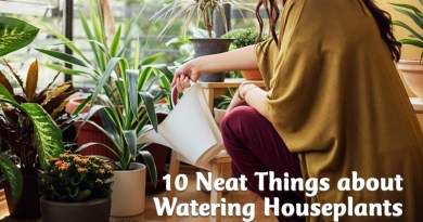 10 neat things about watering houseplants