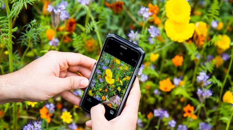 Your Garden Pictures