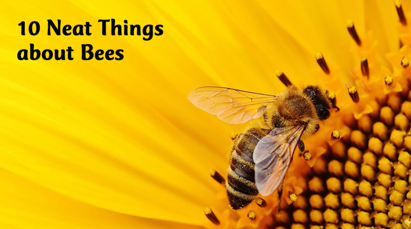 10 neat things about bees