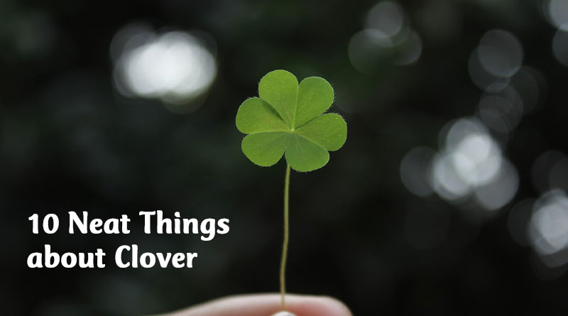10 neat things about clover