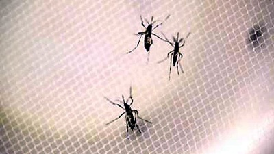 Zika-mosquitos-not-for-media-gallery-JPG_20161014101701-159532